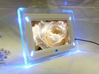 Sell 7 inch Digital Photo Frame with LED light (DPF704)