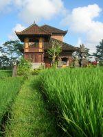 Guesthouse Rental in Bali