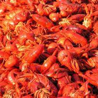 Best Quality Fresh Crayfish/Frozen Crayfish Tails/Dried Crayfish Wholesale