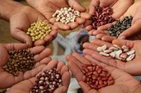 All types of plant seeds for sale