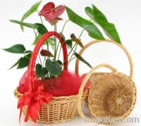 Sell round willow basket high quality
