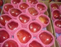 Sell red delicious apple