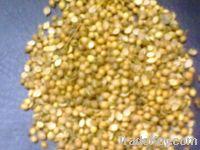 Sell Coriander seeds