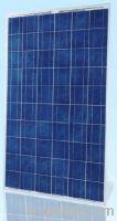 POLY Solar Panel 230 to 245W