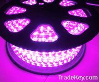 Sell 220V SMD5050 60LEDs/M RGB LED Strip Lights