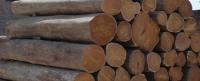 Wooden Teak logs
