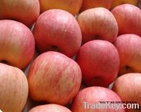 Grade A Gala Apples for sale