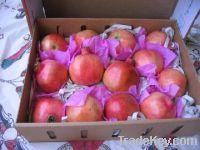 Fresh Grade A Pomegranate