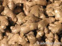 high quality best price ginger from South Africa