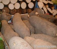 yam directly from farmer price