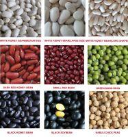 light speckled kidney beans sugar bean pinto bean for sale