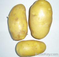 Sell Fresh Potato