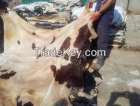 offer raw wet salted cattle hides