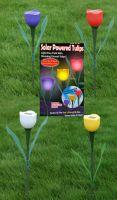 Sell Solar Tulip Lights (PP-012)