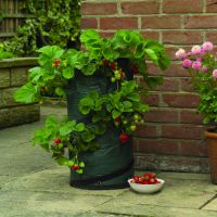 Sell Pop Up Strawberry Planter