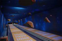 Bowling Panels