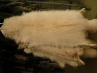 Sell Chinese raccoon skin