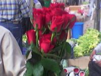 fresh cut flowers & foliages best quality , prices