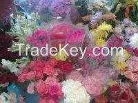 fresh cut Carnation