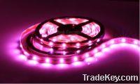 Sell waterproof SMD3528 pink led strip light DC12V 300LEDS 5M/reel