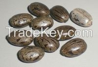 Sell Castor seeds