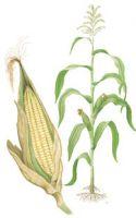 Sell corn yarn