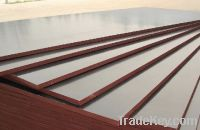 Sell Concrete Formworking Plywood