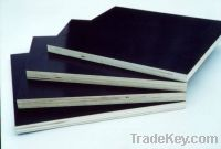 Sell HMR Film Faced Plywood