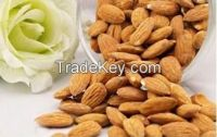 Fresh Raw Almond, Good Quality, Organic