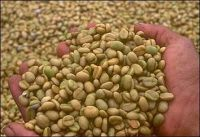 Export Coffee Beans | Arabica Coffee Beans Suppliers | Robusta Coffee Beans Exporters | Coffee Bean Traders | Wholesale Coffee Beans | Buy Coffee Beans | Bulk Coffee Bean | Green Coffee Bean Buyer | Low Price Roasted Coffee Bean | Import Coffee Bean | Cof