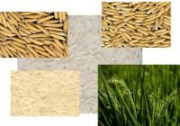 Rice of all Types Basmati Super Kernel Brown White etc