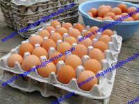 sell egg tray