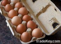 Sell  FRESH BROWN CHICKEN EGGS