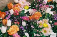 Sell Flowers & Plants
