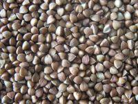 Sell Roasted Buckwheat