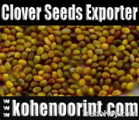 Sell Offer Persian Clover Seeds