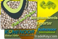 Sell Offer Sorghum Seeds