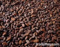 Sell COCOA BEANS