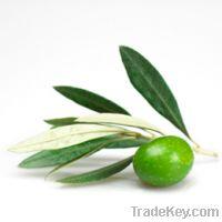 Sell Fresh Olive, Organic Olive Oil, Charcoal