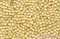 Sell millet , Corn and other grains