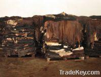 Sell cattle hides, calf skins, sheep skins, lamb skins, goat skins
