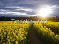SELL SUNFLOWER COOKING OIL