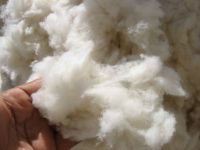 COTTON COMBER NOIL FROM PAKISTAN