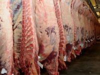 HALAL Frozen Beef whole carcass