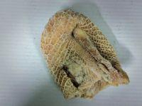Frozen Beef Honeycomb