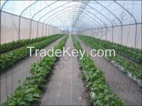 GREEN HOUSE AGRICULTURE UV TREATED FILM