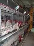 sell   battery cages