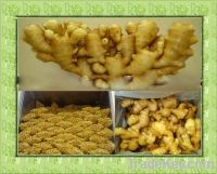 Sell Chinese ginger