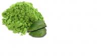 Buy gymnemasylvestre plant