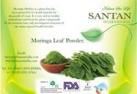 Moringa Oleifera Supplier